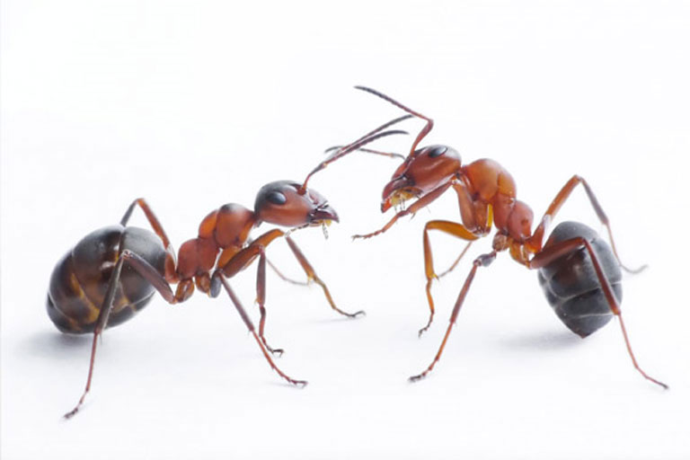 Ant Nest Removal
