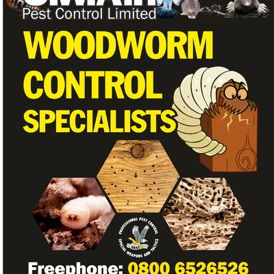 Woodworm Treatment's